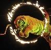 Цирки в Судиславле