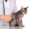 Ветеринарные клиники в Судиславле